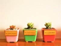 Mini Planta de Escritorio Cuadrada con Logo en Láser